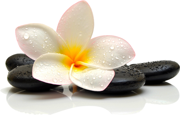 lávakö virág